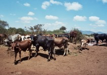 Kenia_037