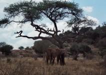 Kenia_042