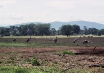 Kenia_051