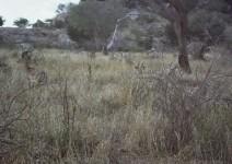 Kenia_060