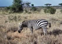 Kenia_093
