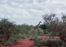 Kenia_098