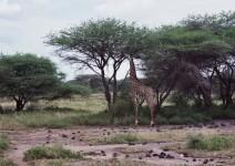 Kenia_116