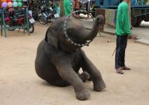 Tajlandia_i_Kambodza_2013_071